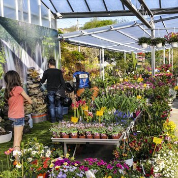 Plantas exterior for Como establecer un vivero
